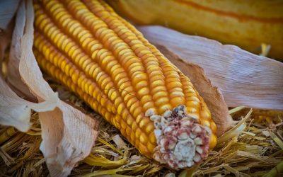 Kanybek Maize Milling Production Expansion Project